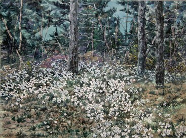 Woodland Daisies, Watercolor by Doug DeWolfe