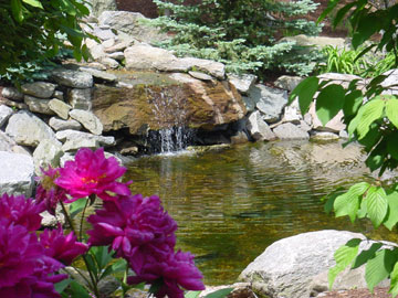 Natural Pond with Waterfall by New View