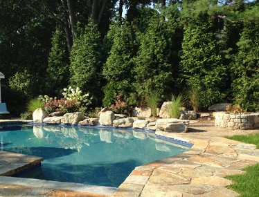 Privacy planting, pool with stone deck and boulder coping