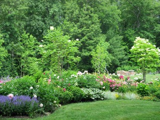 Landscape planting and design by New View