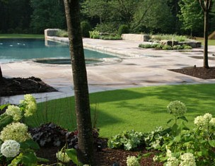 Infinity edge pool, stone patio and bent grass landscape